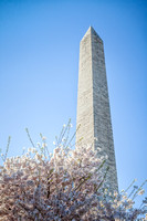 Cherry Blossoms and the Washington Monument - 4