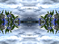 mirrored bluebells over taylor colorado 09