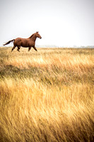 Horses in the prairie - 4