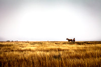 Horses in the prairie - 5