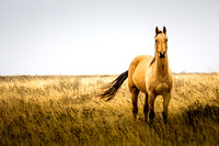 Horses in the prairie - 6