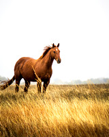 Horses in the prairie - 3